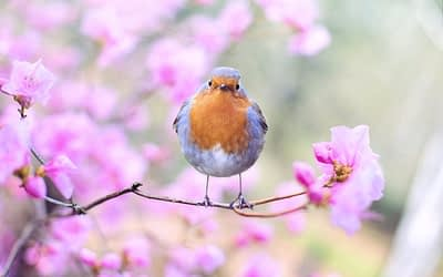 What Trees Are Best For Birds in Colorado?