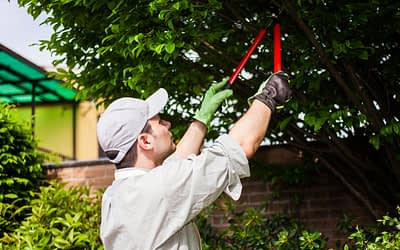 Why Should I Hire a Professional for Tree Trimming?