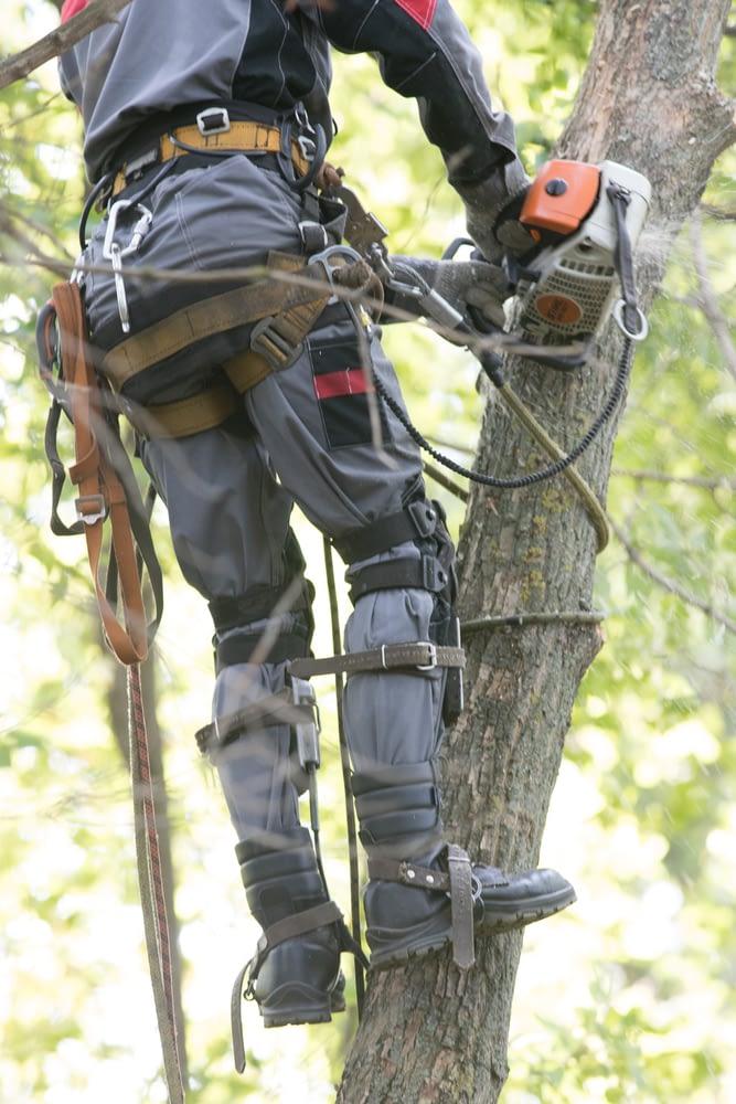 Carlos cutting down a tree in thornton, co